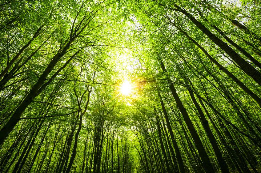 Wald Eindruck, Nachhaltigkeit